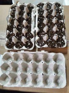 egg carton planters