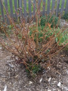 Rose-before-pruning