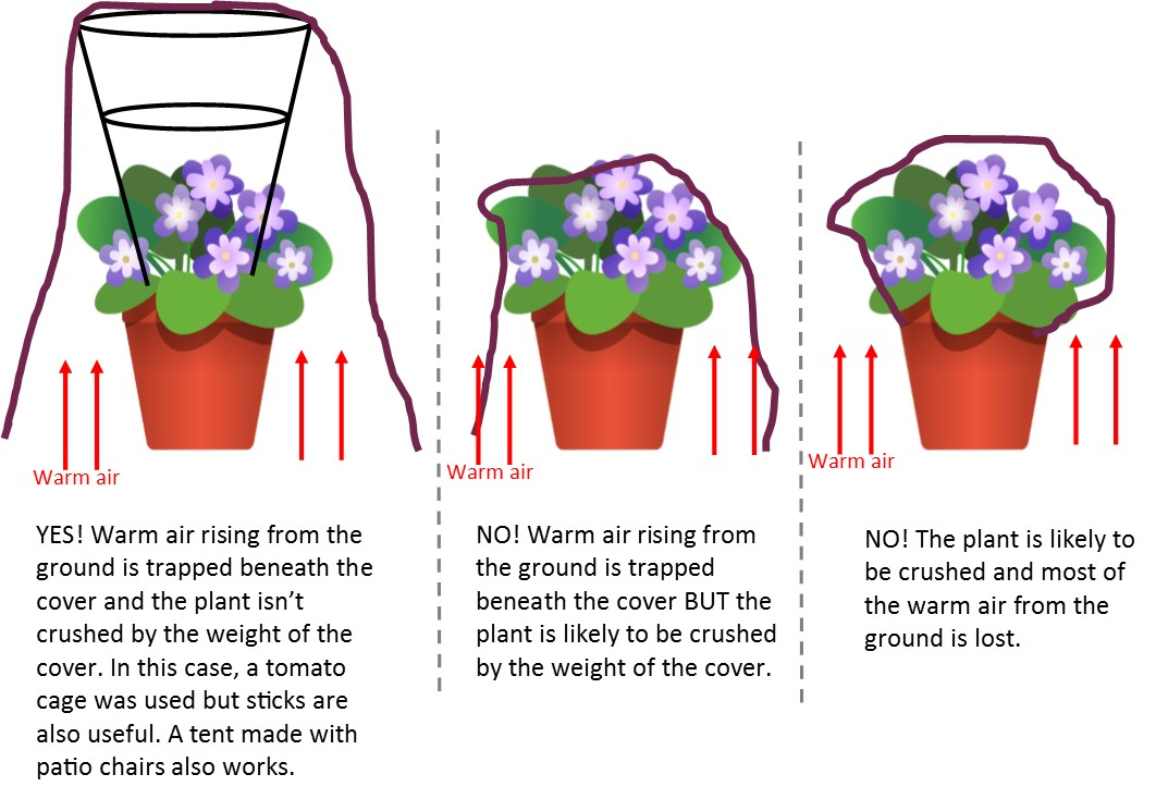 covering potted plants