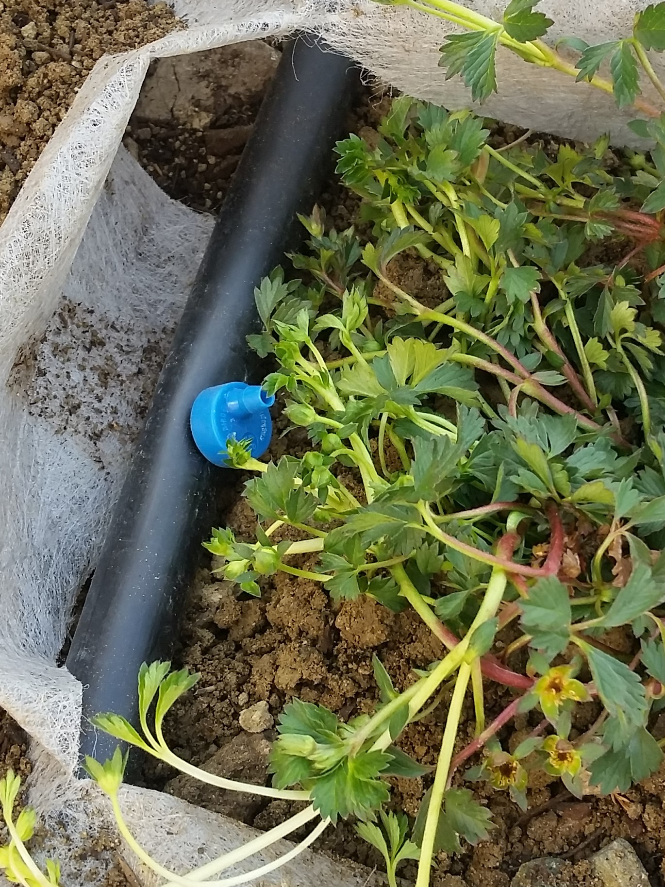 How To Install Drip Irrigation Stephanie Selig Landscape