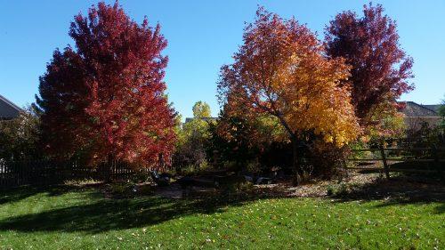 pretty autumn trees