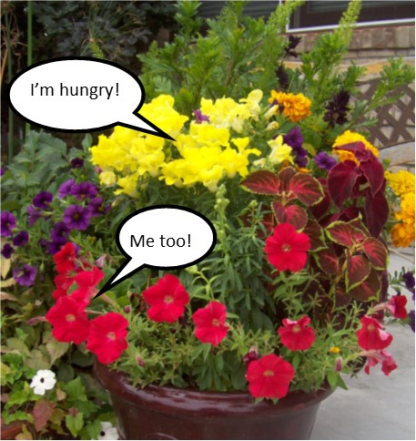 The Plants are Whispering and They Said…