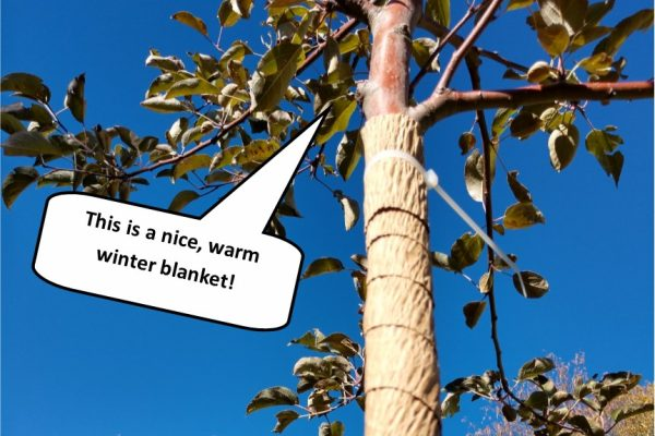tree-blanket