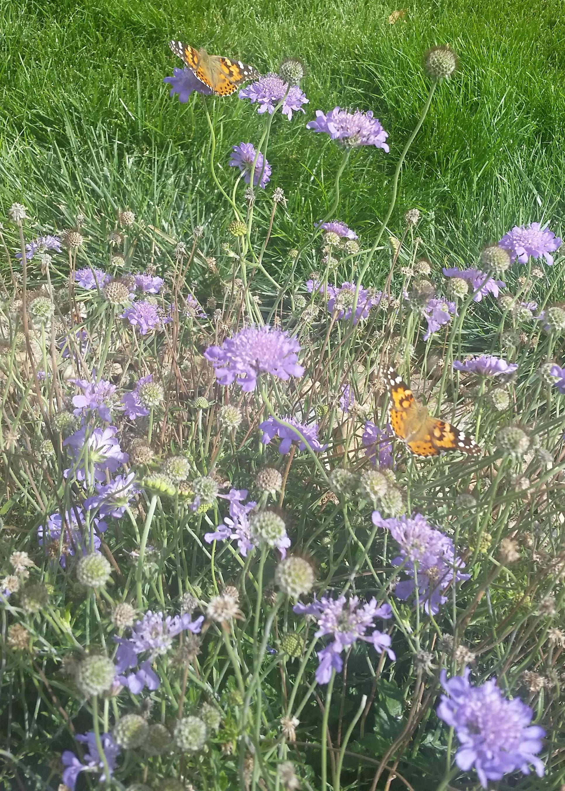 Plants for a Pollinator Garden