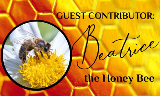 Beatrice Comments on Bee Stings