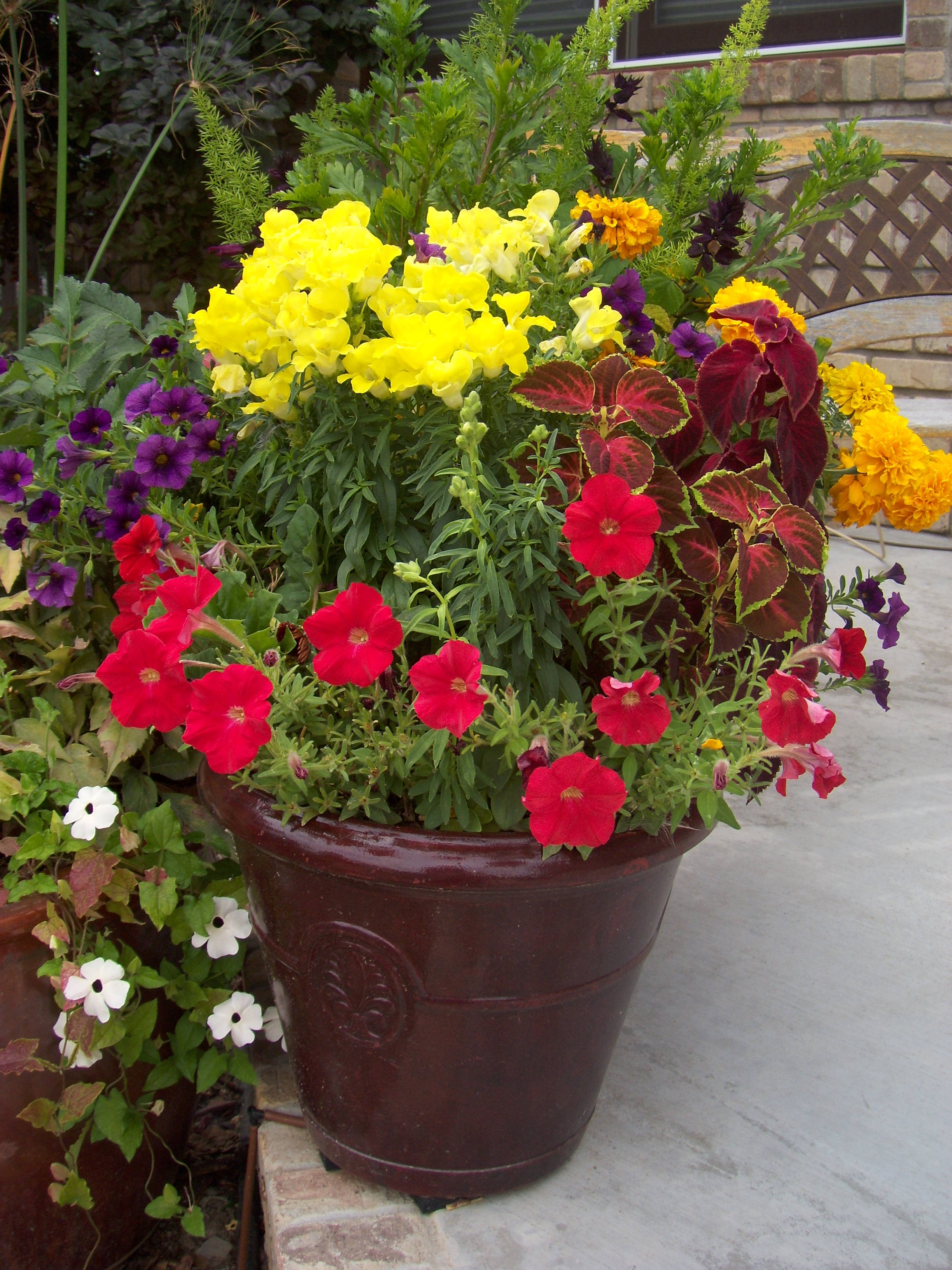 Refreshing Your Container Gardens for Fall