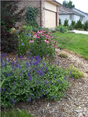 Fort Collins DIY Garden